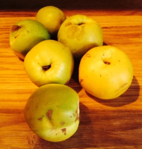 quince - some still green